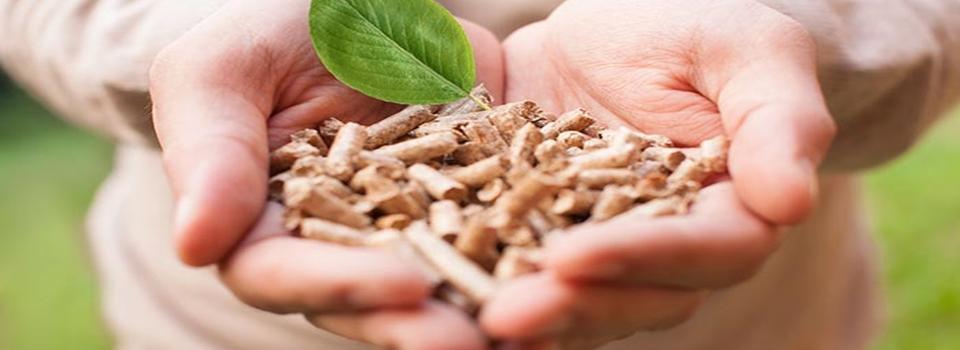 caldaie-a-biomassa3